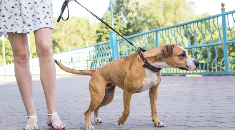 The Best Leash for Dog That Pulls