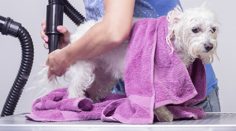 5 Best Shampoo for Maltese Dogs in 2020(Buying Guide & Reviews)