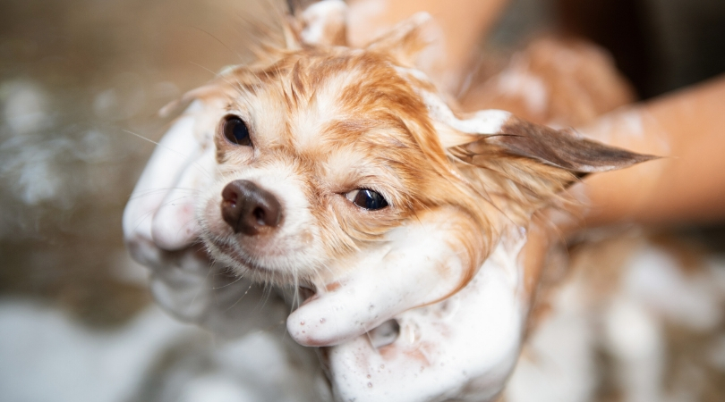 The 5 Best Dog Shampoo for Dry Skin (Reviews)