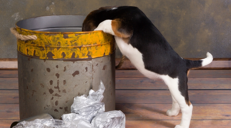 The Best Dog Proof Trash Cans (Review)