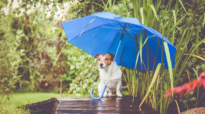 Best Dog Umbrella Leash (Review) in 2020