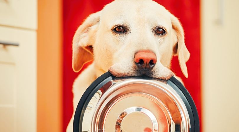 The 5 Best Slow Feeder Dog Bowl (Reviews and Guide)