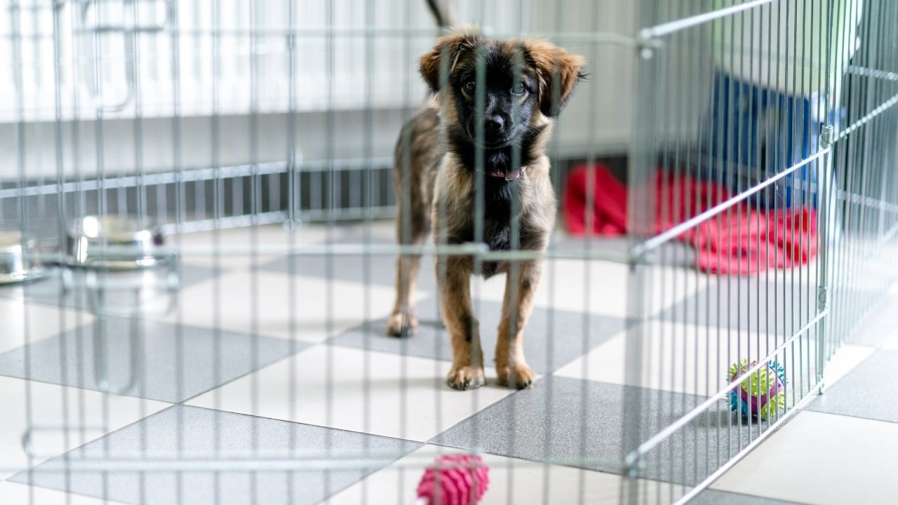 Puppy Crate Training 101 How To Crate Train A Puppy