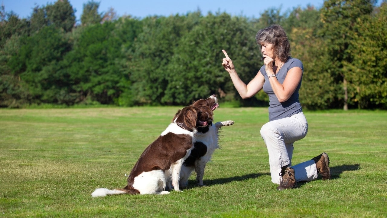 5 Best Silent Dog Whistles (Reviews & Top Pick)
